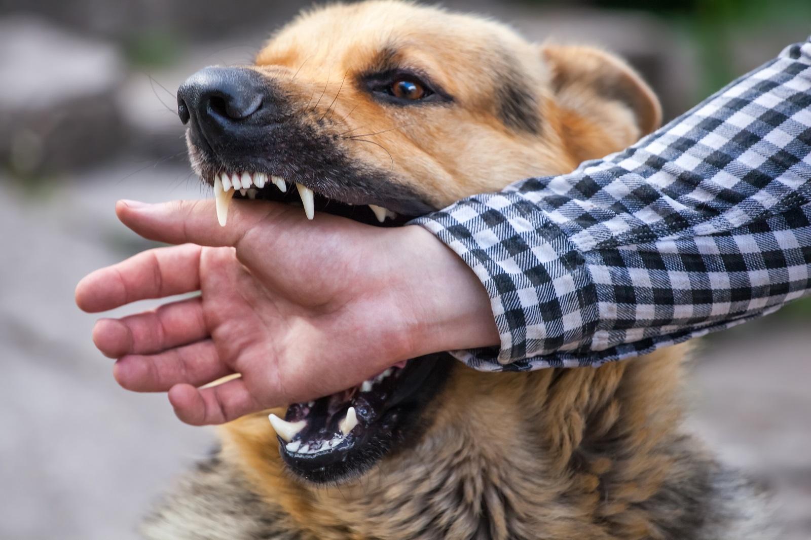Animal Liability